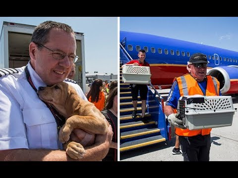 Southwest Airlines welcome on board Orphaned Pets Rescued after Hurricane Harvey