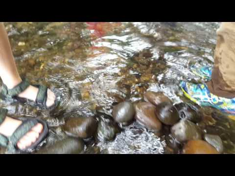 Outdoor education, oregon, crawdads, crayfish, river
