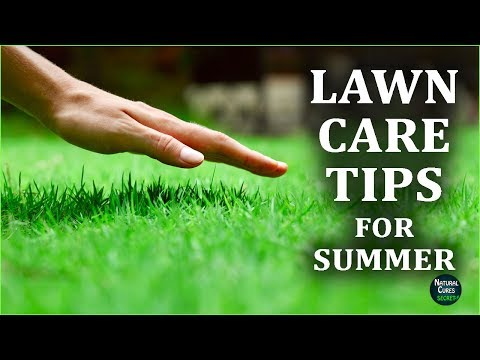 Lawn Care Tips for Summer - Lawn Maintenance