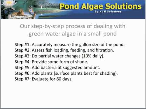 Steps To End Green Water In A Small Pond - http://pondalgaesolutions.com