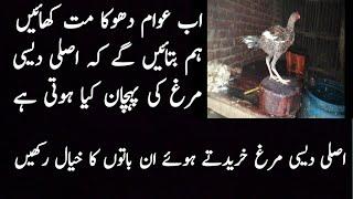 Pure Desi Murgh ki pehchan || pure Desi || Aseel Patha || Aseel Murgha in Pakistan