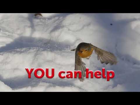 SongBird Survival help The birds this winter