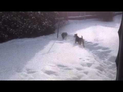 Brick & Zeke silly in snow (2/16/14)