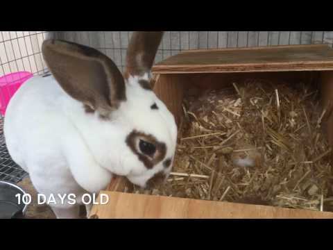 Watch Baby Rabbits Open Their Eyes.