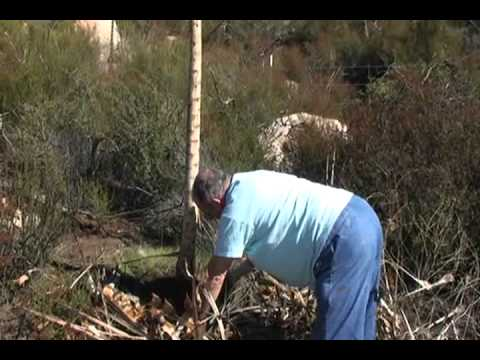 How to Build a Yucca Didgeridoo: Part 1