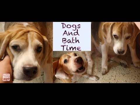 Funny Dog Who Don't Want To Take A Bath - Try Not To Laugh, range of emotions