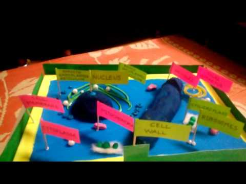Plant cell model