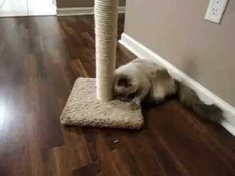 CAT NIP = CAT WEED