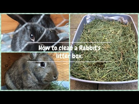 How to clean a Rabbit's litter box!