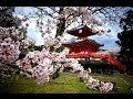 Meditation Zen Music Traditional Japanese Music Relaxing Mus