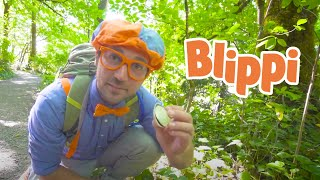 Blippi Goes Hiking | Environmental Learning For Kids | Educational Videos For Toddlers
