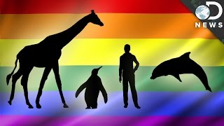 Download How Common Are Gay Animals? Video