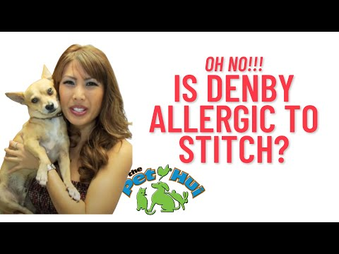allergic to my dog