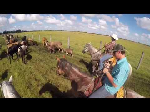 Cattlemen's Livestock Auction Market