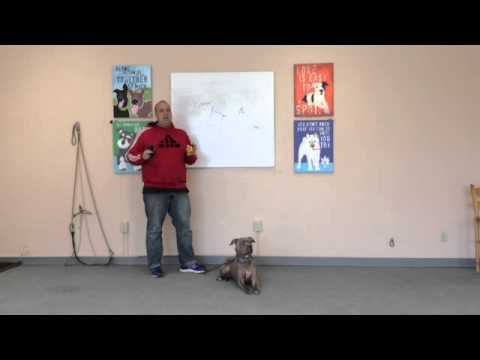 How to Use an Electric Collar to Solve Dog Aggression and Anxiety- 801-895-2731- Utah Dog Training