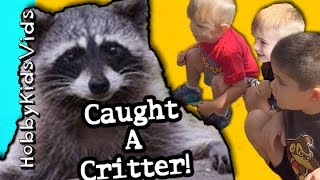 Critter Catcher! Caught 2 Critters With Havahart Cage Wild Animals By Hobbykidsvids