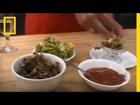 Eating Insects | National Geographic