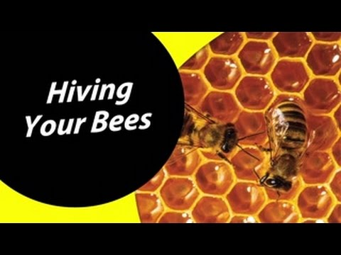 How To Hive Your Bees For Dummies