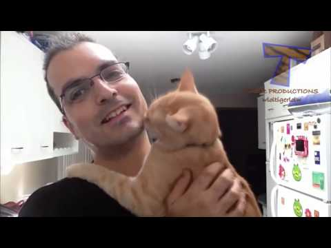 Funny cats annoying owners