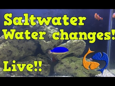 Water Changes In The Salt Water Tanks