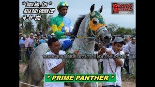 # PRIME PANTHER # MEGA RACE GOLDEN CUP: SANTA ANA (10-09-17)