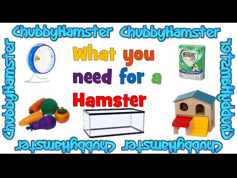 What you need for a Hamster