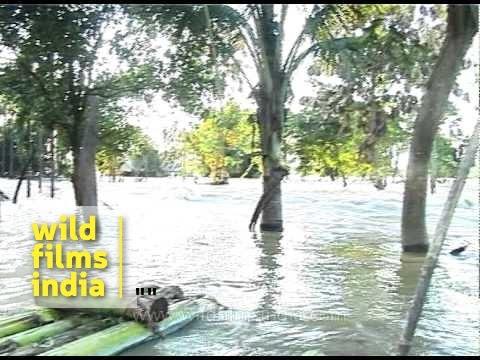 Assam reels from floods