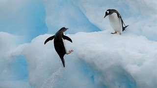 Top 10 Most Funny Penguin Videos (2015)