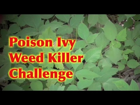 Poison Ivy Tough Weed Killer Challenge- 3 Different Sprays