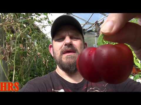 ⟹ Pimento Pepper, Capsicum annuum, Plant and pod review 2018