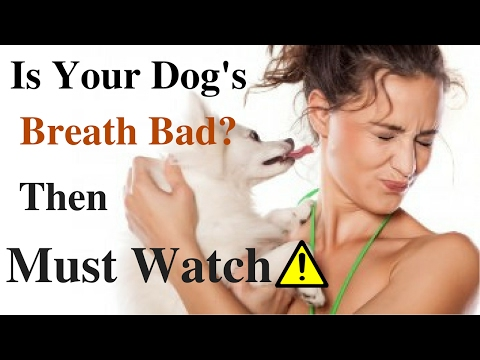 Get Rid Of Dog's Bad Breath