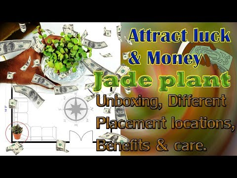 Jade plant placement Feng shui for Luck & Wealth locations direction unboxing setup maintenance care