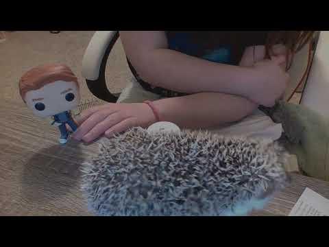 Late Night's With Reginald (Reggie) The Hedgehog