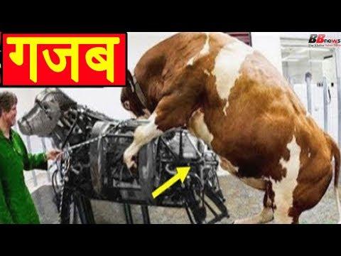 Xxx Mp4 मार्केट में आई इस नयी तकनीक से गायें की जा रही हैं गर्भवती इस को देखते ही चौंक उठेंगे 3gp Sex