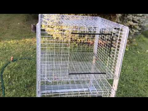 How to Properly Clean a Galvanized Wire Rabbit Cage