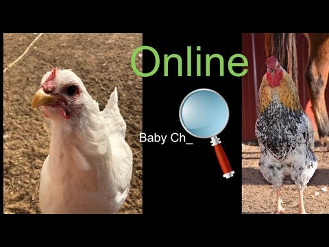 How to Order Chickens Online! Very Simple