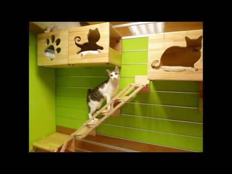 Catswall   A Modular Pet cat Climbing Wall surface Perfect for You Household pet