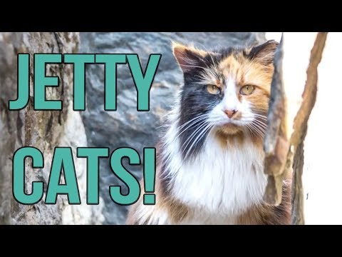 Meet the Jetty Cats!