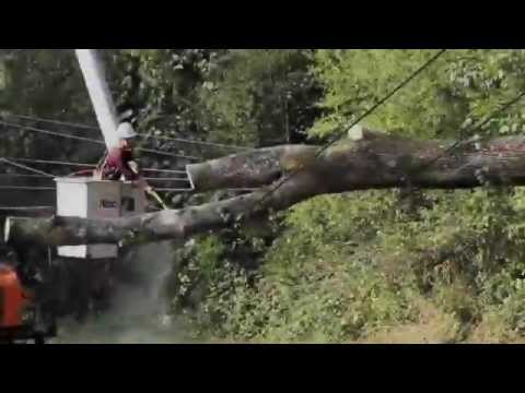 Maple Whipping off of 12,000 volt power lines after Washington Storm