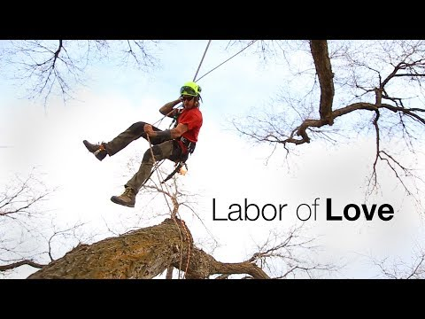 Labor of Love - Tree care