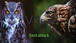 Eagle vs owl best attack hd|video you never seen before