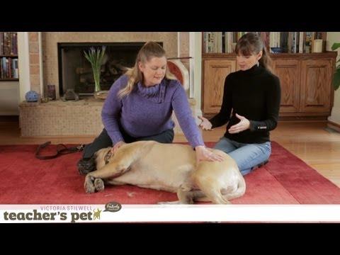 Xxx Mp4 Massaging Your Dog Teacher 39 S Pet With Victoria Stilwell 3gp Sex
