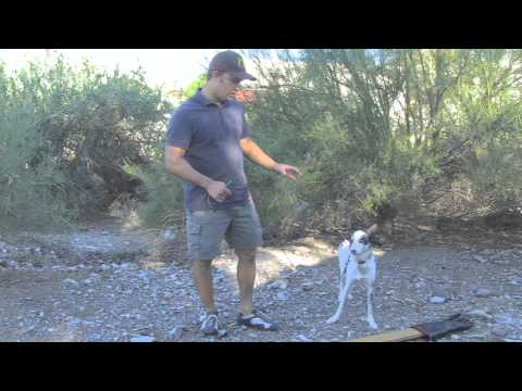 How to Identify and Work with a Fearful Dog