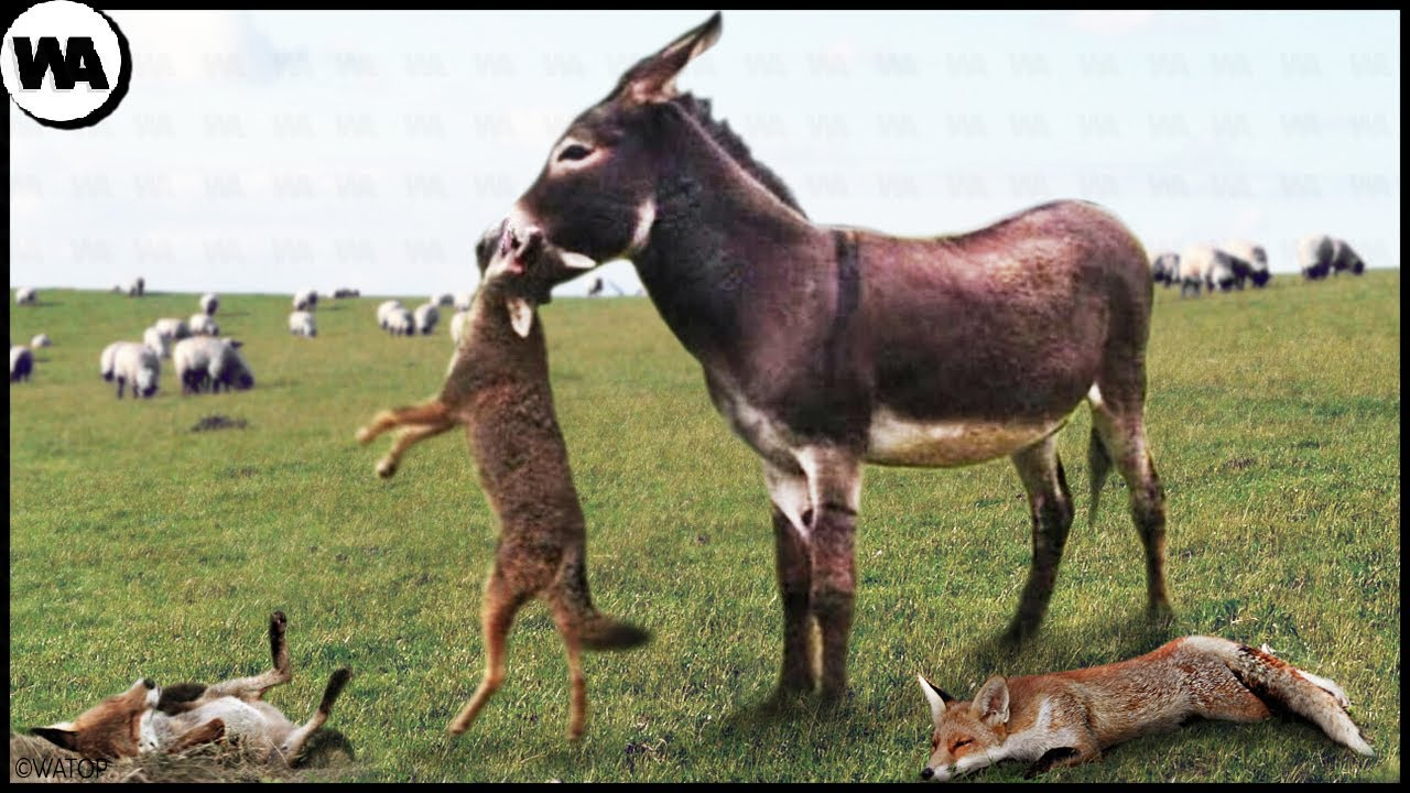 This is Why Farmers Sell Their Weapons and Buy Donkeys