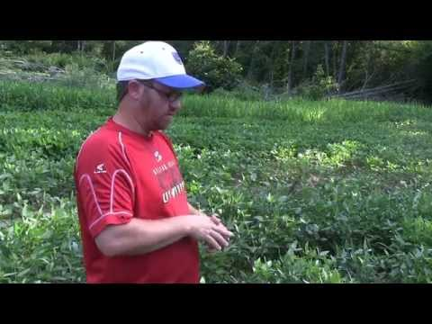 Maximizing Deer Food Plots With Multiple Planting Dates