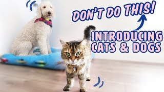 How to Introduce Dogs \u0026 Cats SAFELY 🐱🐶 What to AVOID