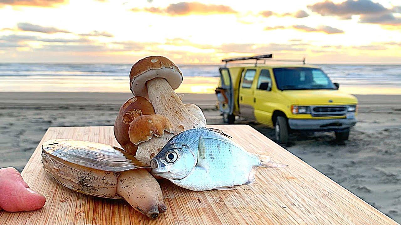 COASTAL SURVIVAL: Fishing, Clams, WILD MUSHROOMS (Catch & Cook)
