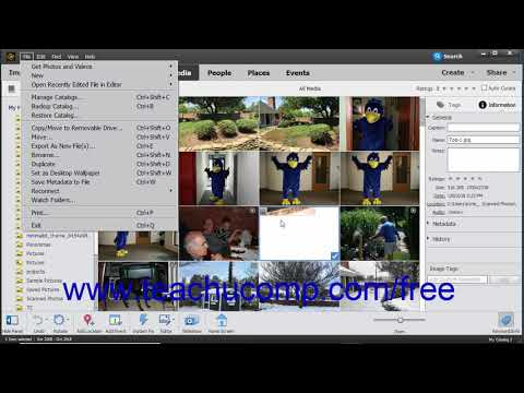 Photoshop Elements 2019 Tutorial Managing Files in the Organizer Adobe Training
