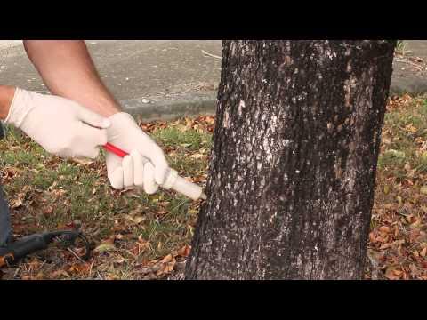 Chemjet Tree Injector