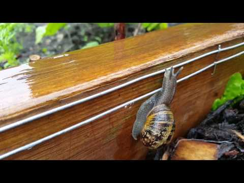 Snail Electric Fence